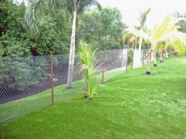 Artificial Grass Photos: Artificial Lawn Bay Hill, Florida Landscaping Business, Backyard Landscape Ideas