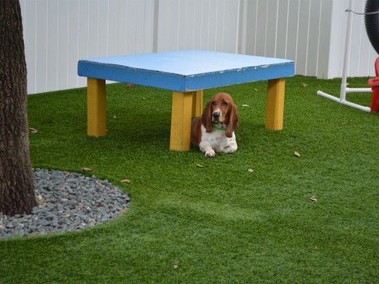 Artificial Grass Photos: Fake Turf Wekiwa Springs, Florida Artificial Grass For Dogs,  Dog Kennels