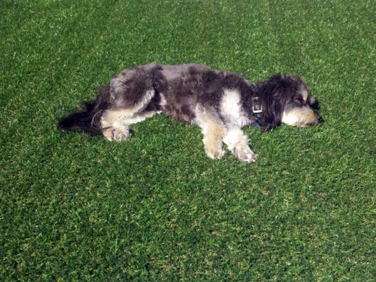 Artificial Grass Photos: Grass Carpet Auburndale, Florida Landscape Photos, Dogs Runs