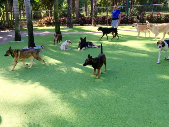 Artificial Grass Photos: How To Install Artificial Grass Longwood, Florida Pet Paradise, Dogs Park
