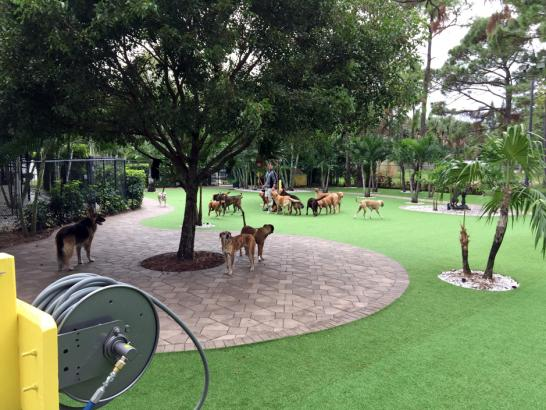 Artificial Grass Photos: Synthetic Turf Supplier Nokomis, Florida Landscape Photos, Commercial Landscape