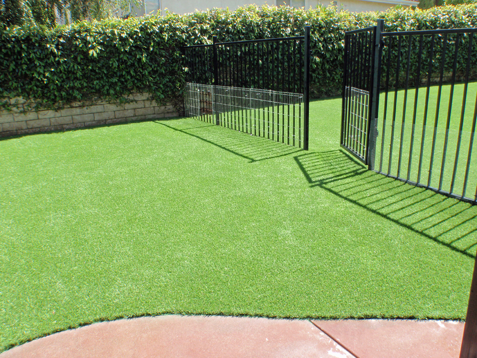 synthetic grass cost minneola florida pictures of dogs small front yard landscaping - Synthetic Grass Cost